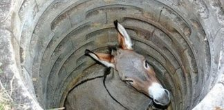 The donkey down the well.