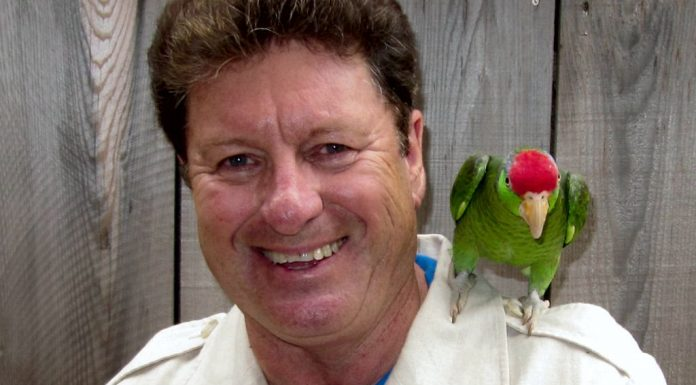 Amazon parrot Lucky on Terry Wilson's shoulder