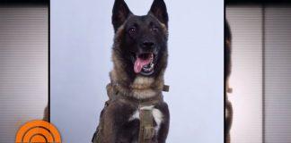 Conan, our American K-9 Hero helps with Abu Bakr al-Baghdadi Raid