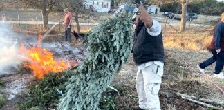 Jamie Willis makes canes for Vets from Christmas Trees
