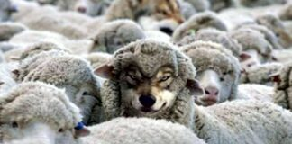 A Wolf in sheep's clothing.