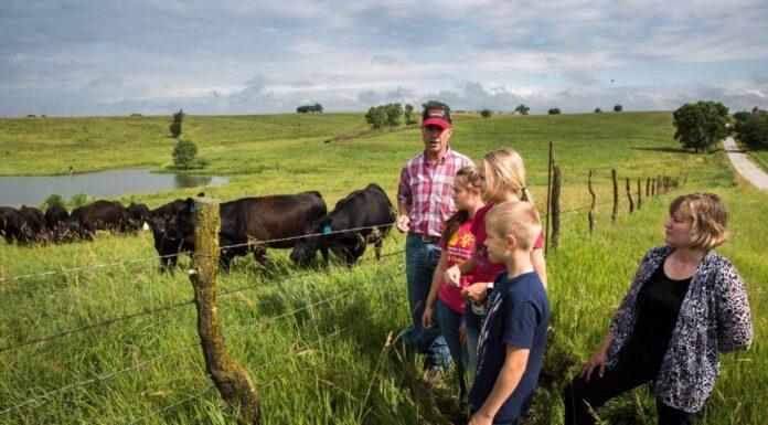 Cattle farmer Rod Christen